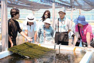 海ブドウの養殖場の見学へ。