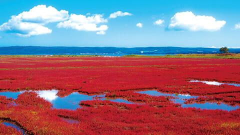 澄み渡る青と緑と赤いサンゴ草の大パノラマ<br>■網走